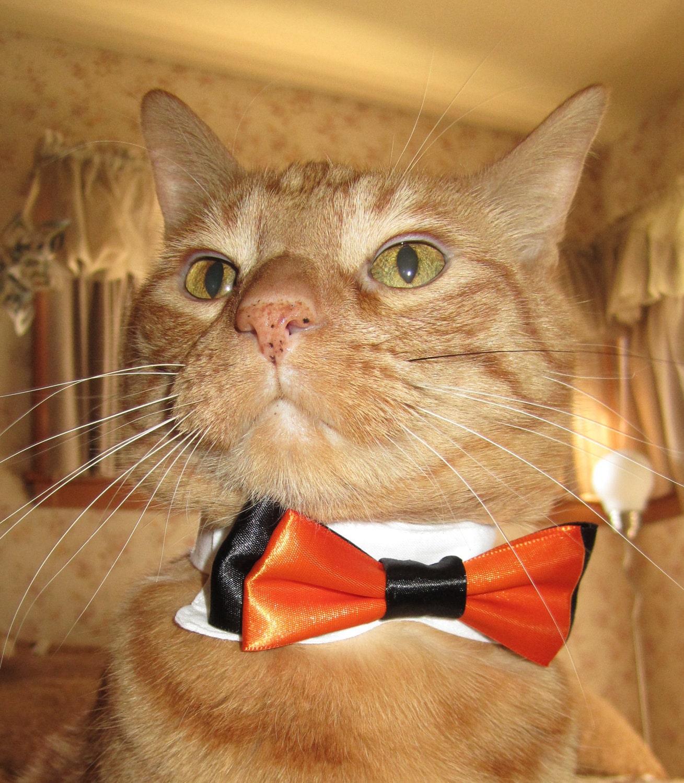 tuxedo bow tie cat collar
