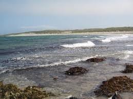 Dried Organic Bladderwrack Seaweed