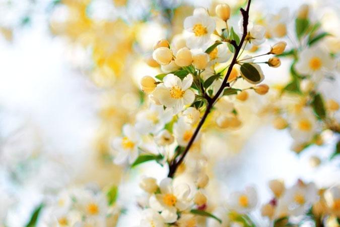 Свежие фотографии природы - красота фотографии Весна 8x12 - яркий веселый праздник домашнего декора хозяйка подарок under30