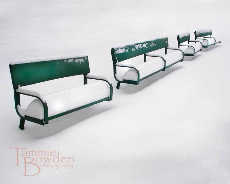 Green Benches - Original Photograph 8x10 - TammieBowdenPhoto
