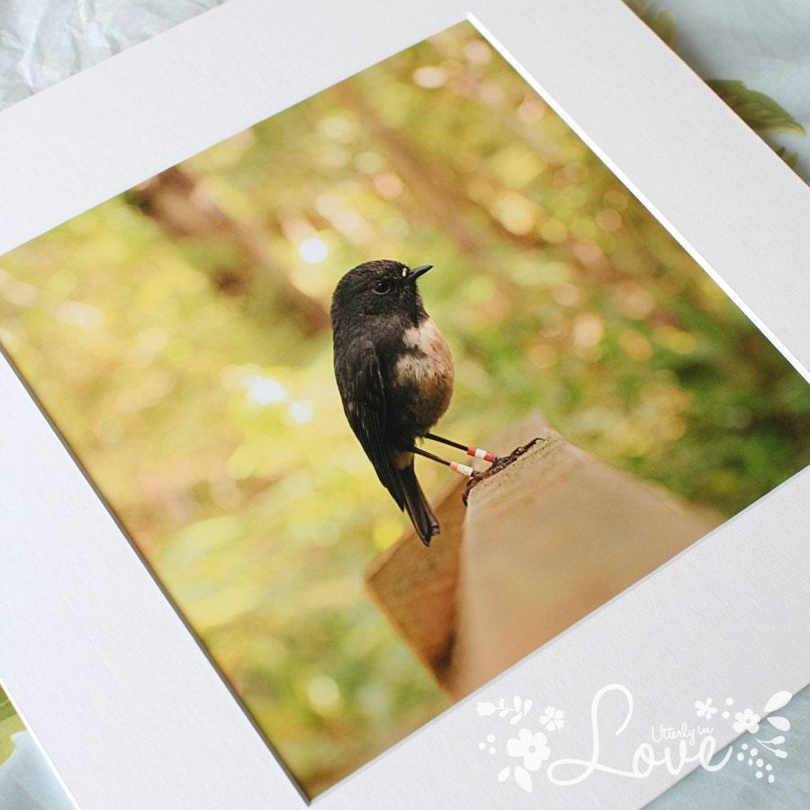 """Mr Robin Bird (8x8"""" print)"""