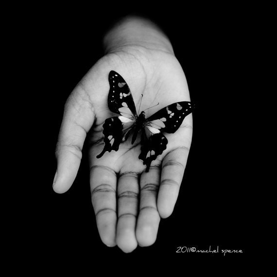 Delicate Butterfly B&W 10X10 Photograph Affordable Home Photography Butterfly Prints Nature Photography - machelspencePHOTO
