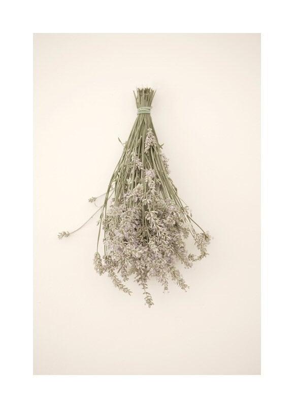 Lavender art - Fine art photography print - Floral photography art - 6,7 x 10 - JKphotography