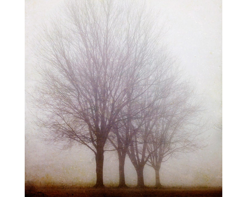 Landscape Photography, Trees in Morning Fog, Autumn, Fall, Nature, Mysterious, Muted, Enchanted Woodland, Fairytale, Rustic - Standing Still - EyePoetryPhotography