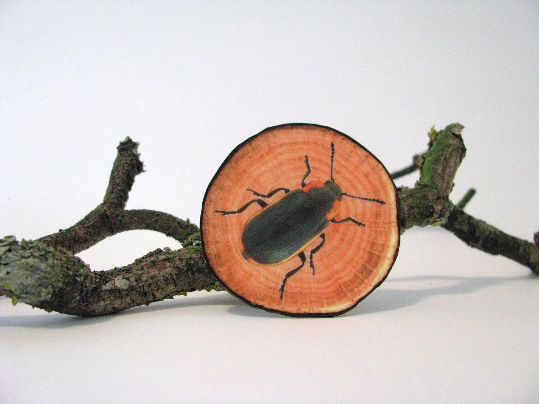 fake woodslice and beetle print brooch woodlands series - natural history - beetle print - redstitchlab