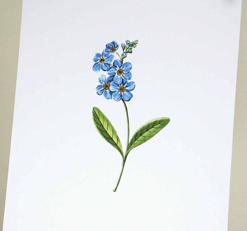 Forget Me Not Print - giardino