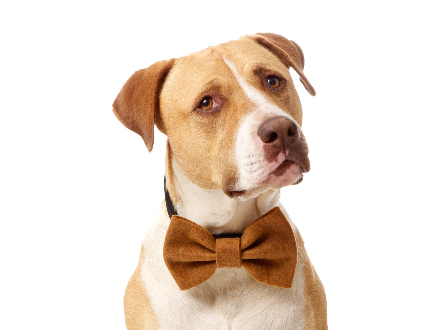 Adorable Eco-Friendly Felt Dog Bow Tie (Choose from 25 colors) - CharlieHeartsDiesel