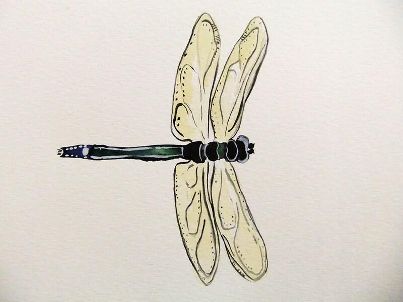 Dragon Fly-Original Watercolor Painting - jasonpaints1
