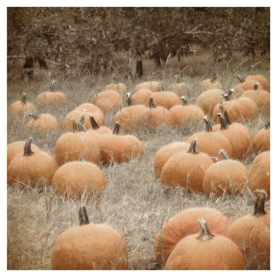 Pumpkin Patch Photo, soft focus, texture, sepia, orange, autumn, wheat, field, beige, botanical, brown, home decor - semisweetstudios