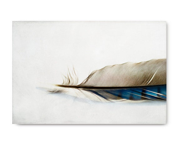Feather photo, feather art, nature photo, nature print, blue jay feather, feather photography, feather print, feather art print, grey, gray - semisweetstudios