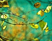 SALE Harvest Fall autumn gold golden leaves mustard green turquoise yellow blue decor photo photograph - 11x14 Fine Art Photography Print