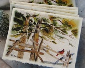 Winter Cardinal Card set of 5