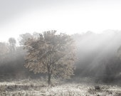 "Landscape Photo, ""Morning Mist No, 103""  black and white, dramatic fog, grey, country, glowing sunlit tree, ethereal autumn, fall,"