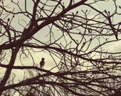 Abstract Nature Photography bird, tree branches, early spring - theartofobservation