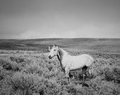 Spring Showers, Dramatic Black and White Photograph, White Horse and Storm, Size 8x10, Horse Art - ApplesAndOats
