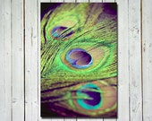 Peacock feathers photograph - metallic bright colorful wall art - home decor - peacock colors - green purple blue - wall art 8x12 print - RetroLovePhotography