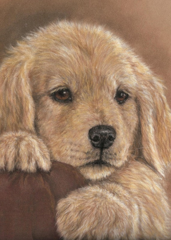 Golden Retriever Pup ACEO Print