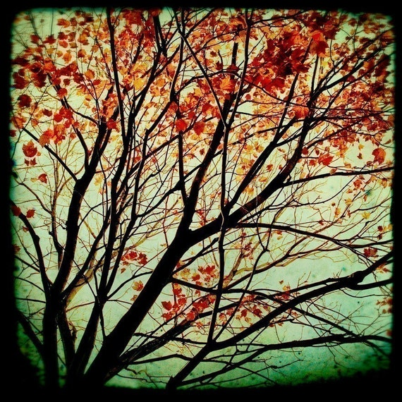 Autumn Photograph, Fall Photography, Trees, Nature, TTV, Colorful - Autumns Alchemy