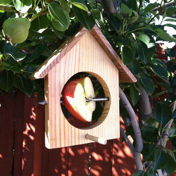 Hanging bird house style apple bird feeder
