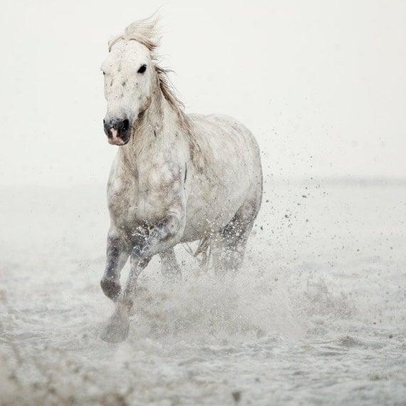 Лошадь фотографии, Белый конь проходит через воду, Настенный декор, мечтательный фотографии природы, животных - Дикие сердцем