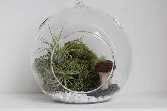 Whimsy-arium Brown Mushroom Garden DIY Kit
