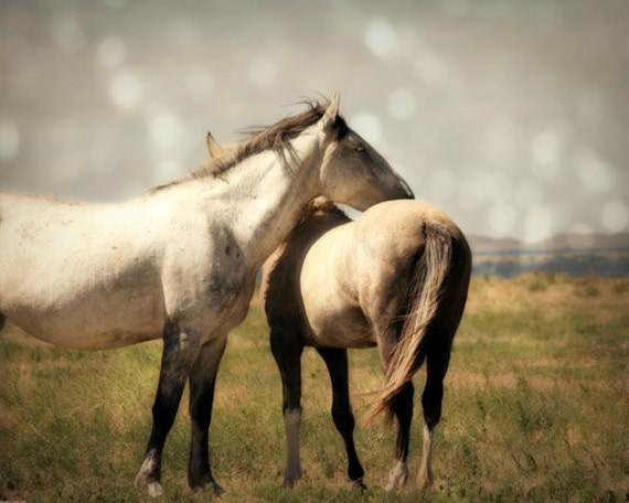 Horse Photograph - mustangs, wild, prairie, free - Living Free