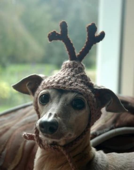 RESERVED - Dog hat - REINDEER - Christmas pet hat - Humorous - Special size