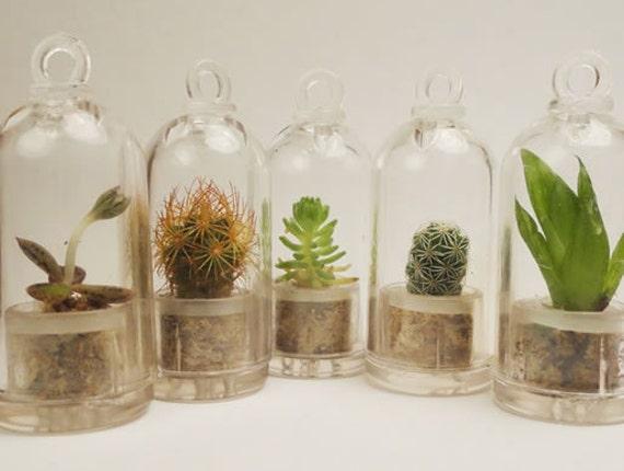 Wearable Plant - Secret Suprise Dome GemSprout Pendant