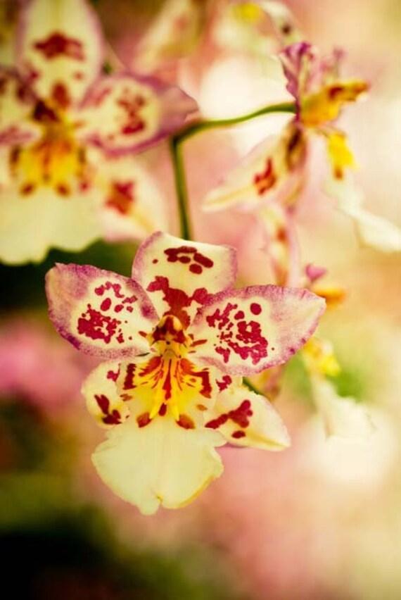 Если Моне орхидей.  Экзотический розовый lavendar зеленый тропический сад импрессионистической романтическое лето 8x10 Репродукция фотографии