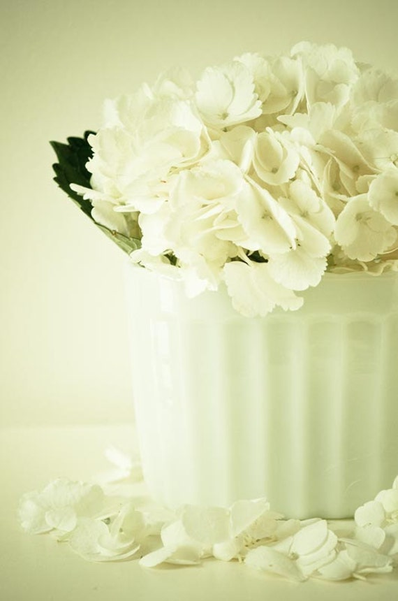 Pure.  простой белый декор.  мечтательная фотография цветка.  потертый шик дома.  современный минималистский стены искусства.  готовые рамы. французский стране