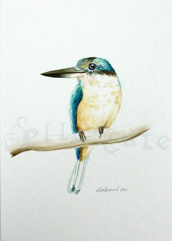 Kotare - a blue bird original watercolour