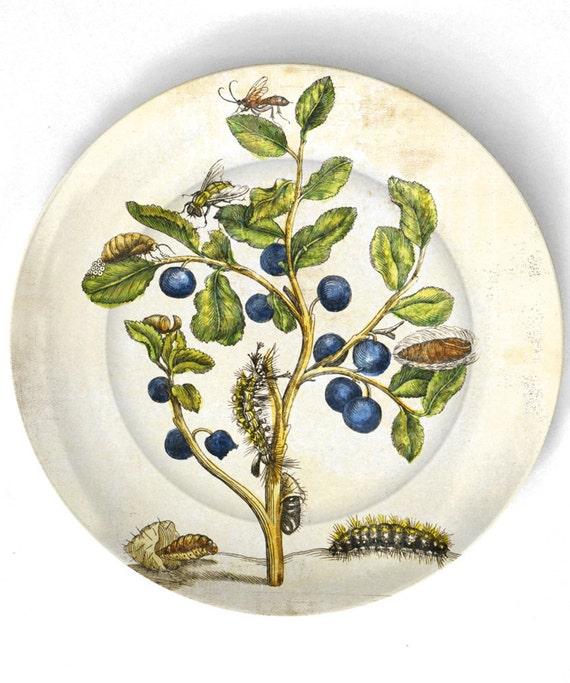 Botânico de 1600 artwork IV - reproduzida em 10 polegadas Placa de Melamina