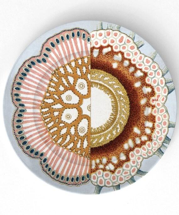 Anêmona II - 1800 Ernst Haeckel - 10 Placa de Melamina polegadas
