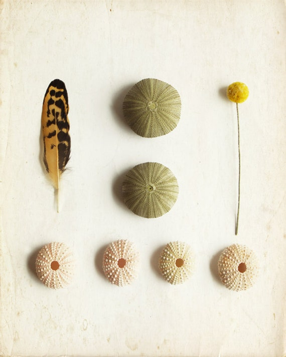 Feather Art Photography with Sea Urchin 8x10 Archival Photograph