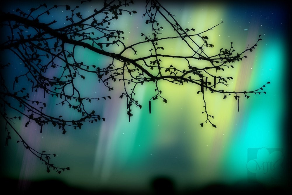 Tree Branch Silhouette Aurora Borealis Photography Print