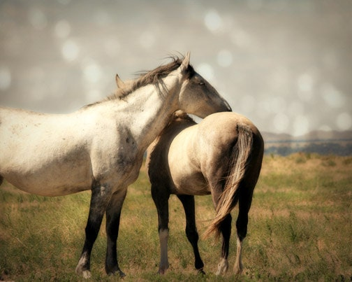 wild horse black girls personals The wild horse (equus ferus) is a species of the genus equus, which includes as  subspecies  black hills wild horse sanctuary jump up ^ the brumbies.