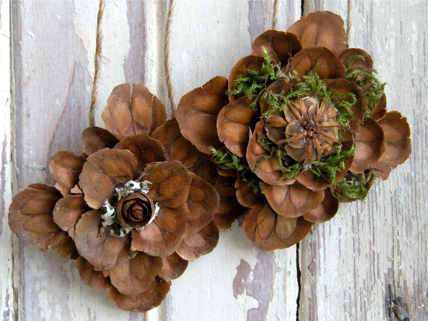 1000 images about pine cone crafts on pinterest pine for Pine cone art projects
